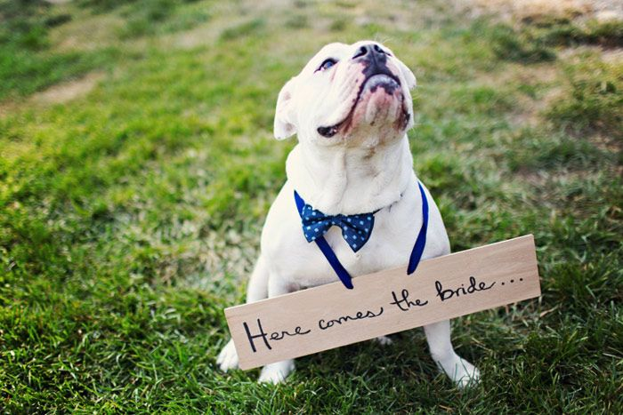 doginwedding_sign