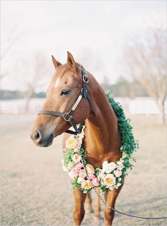 horseinwedding